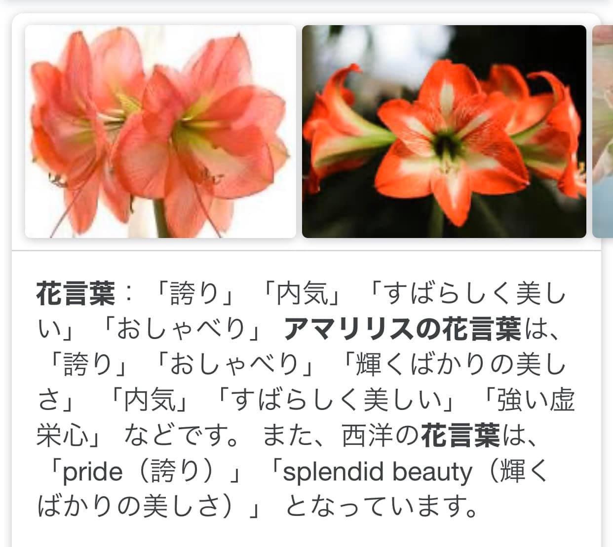 アマリリスの花言葉☆1